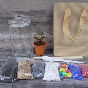 Premium Terrarium DIY Kit