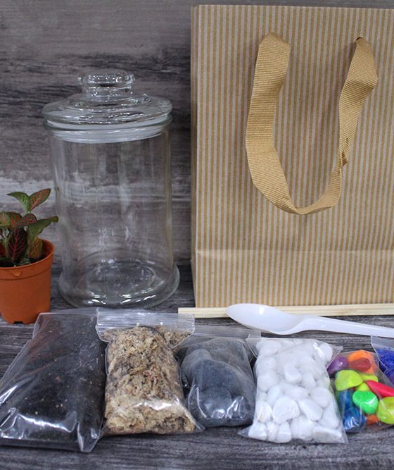 Premium Terrarium DIY Kit
