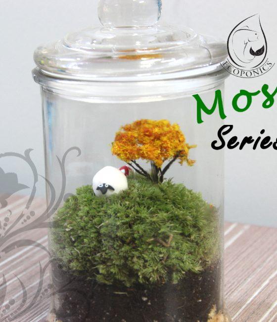 Moss Series - MS01