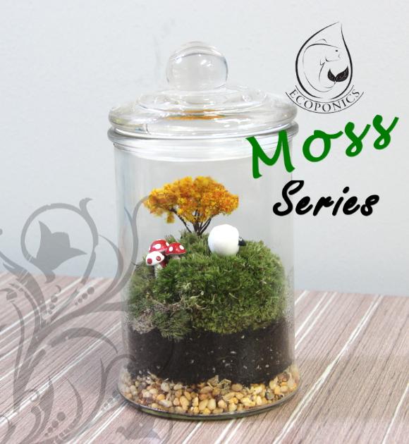Moss Terrarium Singapore Moss Series 01
