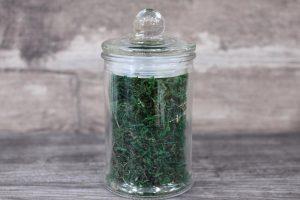 Decorative Green Moss