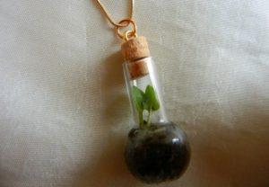 Good ideas for terrarium making!