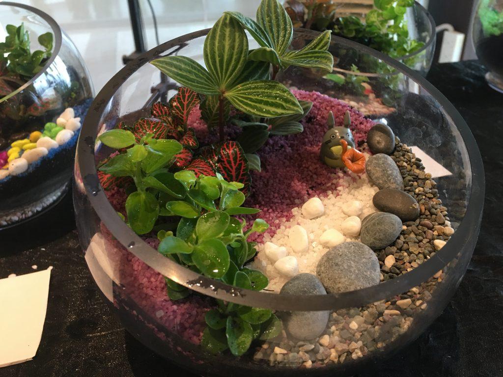 assorted terrarium workshop