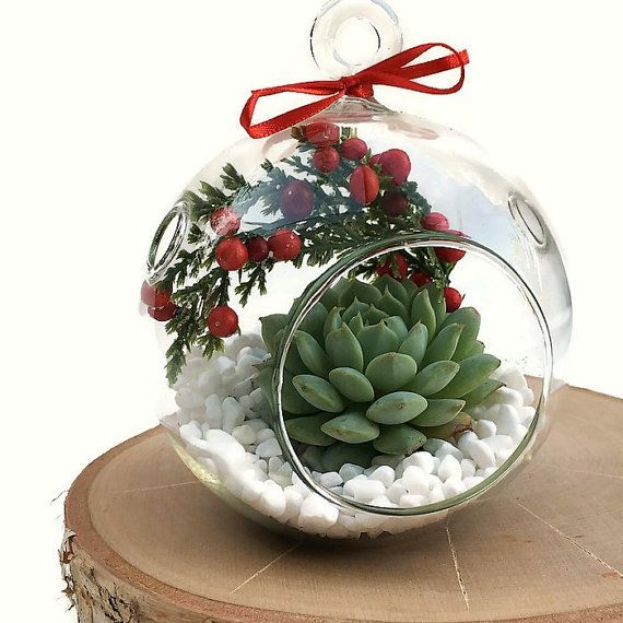CHRISTMAS TERRARIUM SINGAPORE