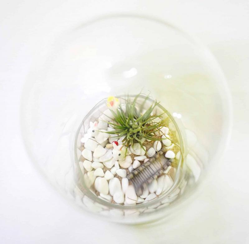 Assorted Terrarium Series Glass Bottle Terrarium Assorted Series - TAS 02 April 2021