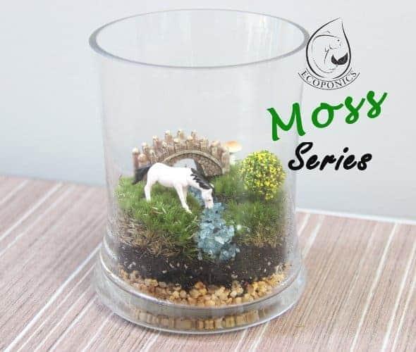 moss terrarium Exclusive Moss Series - EMS 02 April 2021