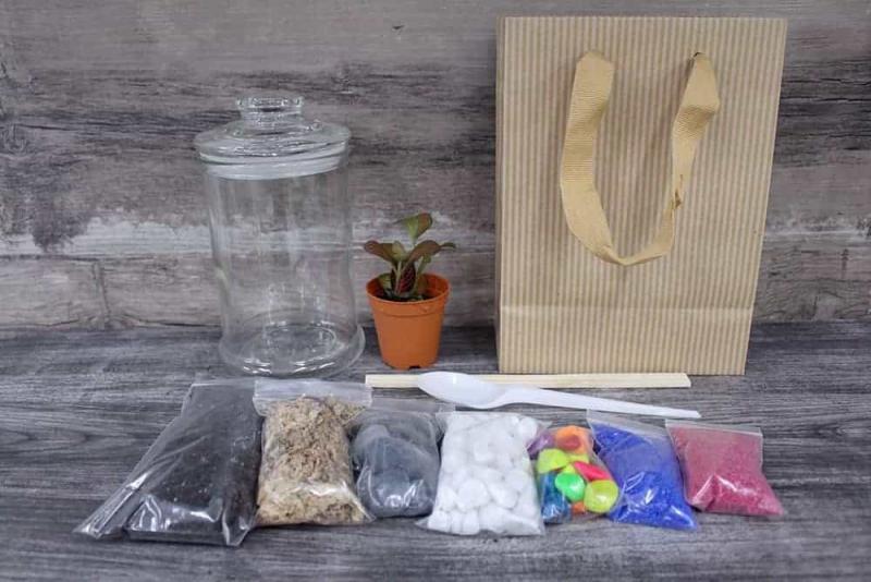 Terrarium diy kit singapore Premium Terrarium DIY Kit August 2021