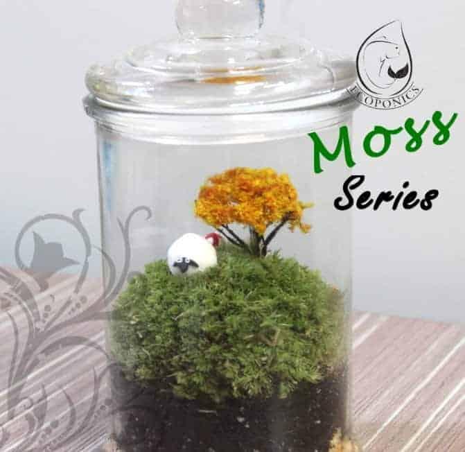 moss terrarium singapore Moss Series - MS01 April 2021