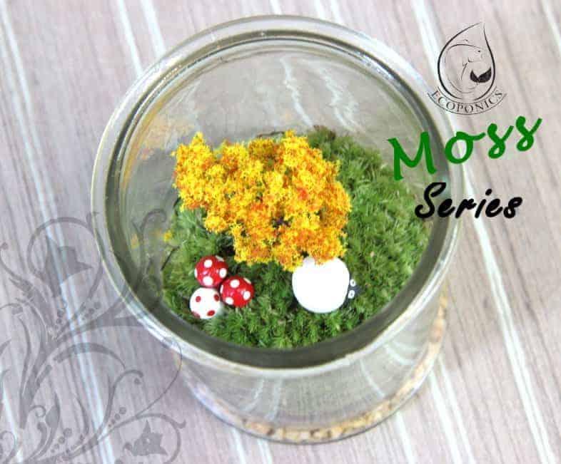 moss terrarium singapore Moss Series - MS01 August 2021