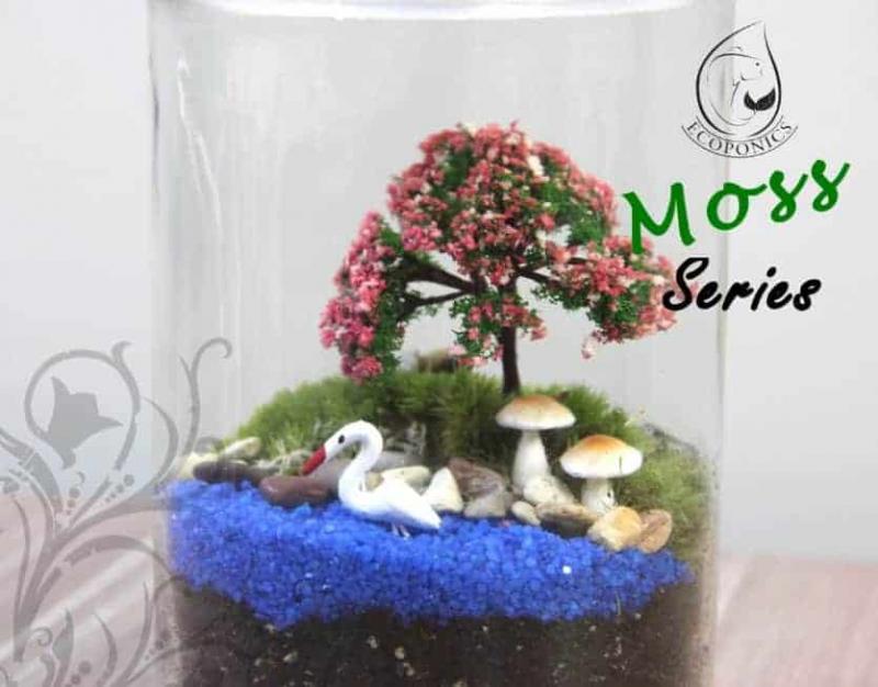 moss terrarium Moss Series - MS02 April 2021