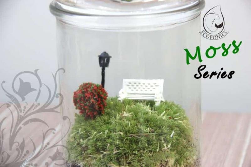 moss terrarium Moss Series - MS03 August 2021