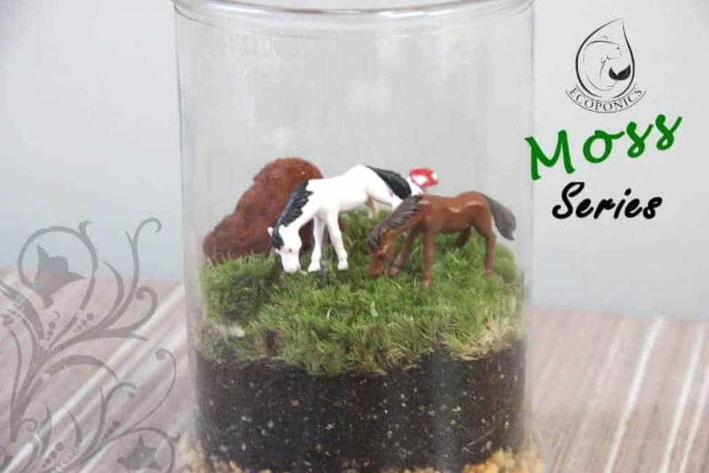 moss terrarium Moss Series - MS04 April 2021