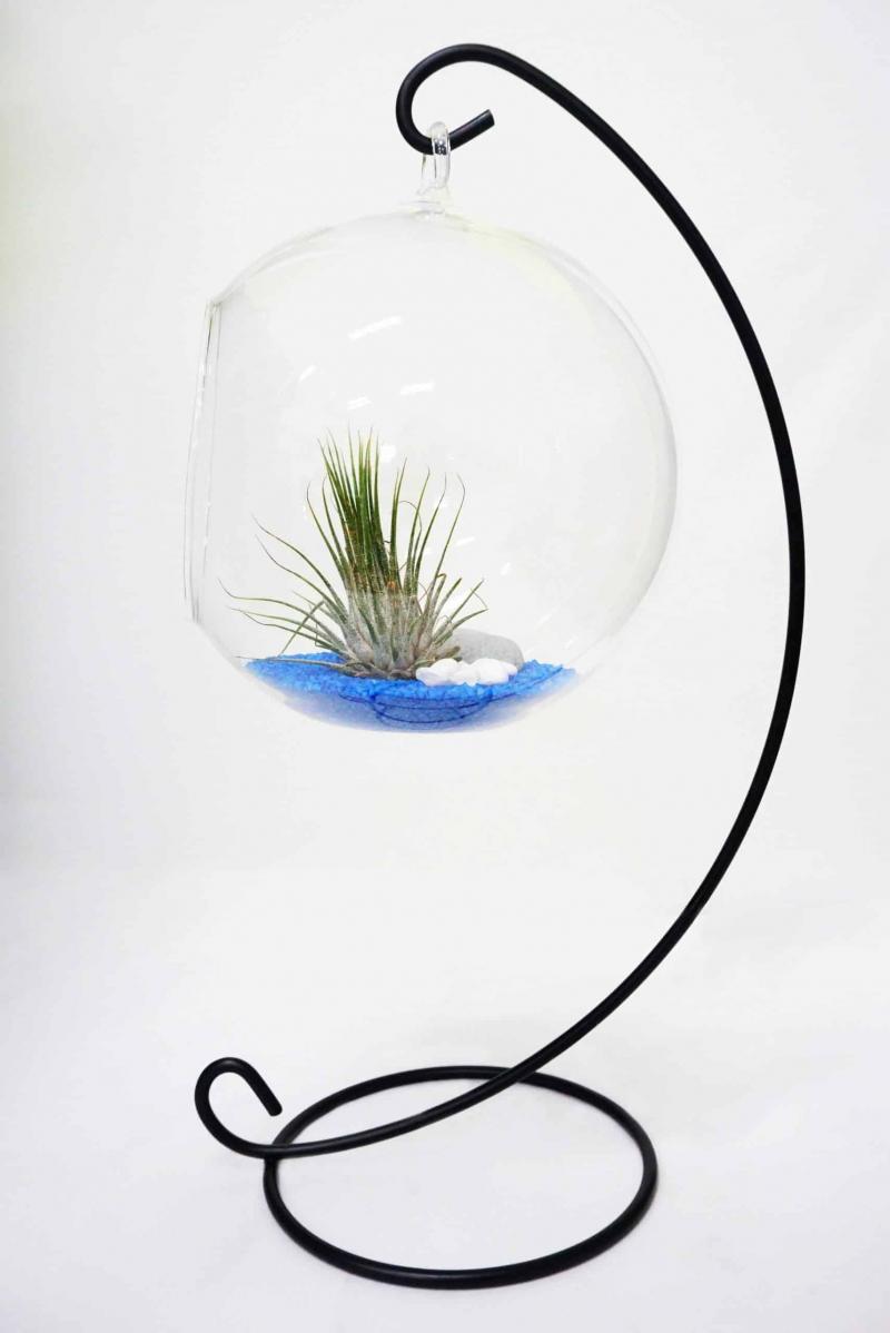 Assorted Terrarium Series Glass Bottle Terrarium Assorted Series - TAS 01 April 2021