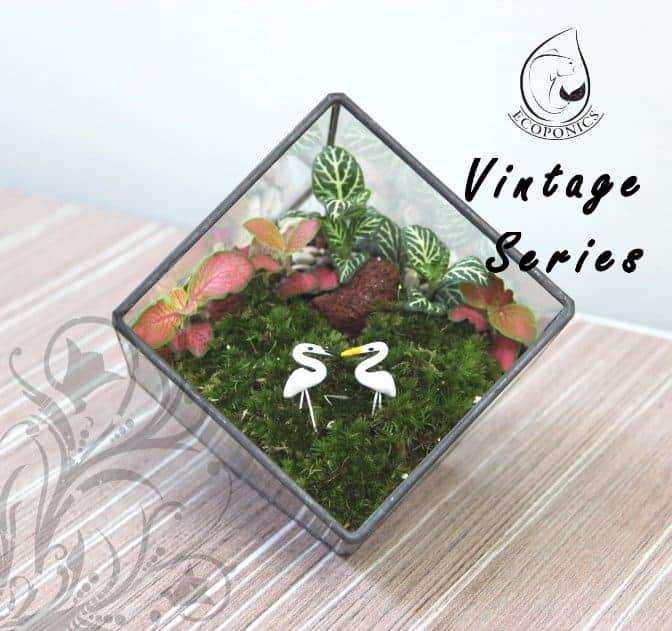 terrarium Vintage Series - VS 02 April 2021