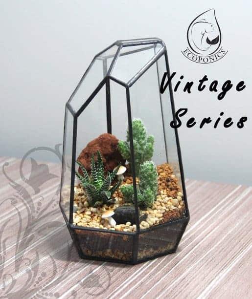 terrarium Vintage Series - VS 03 April 2021
