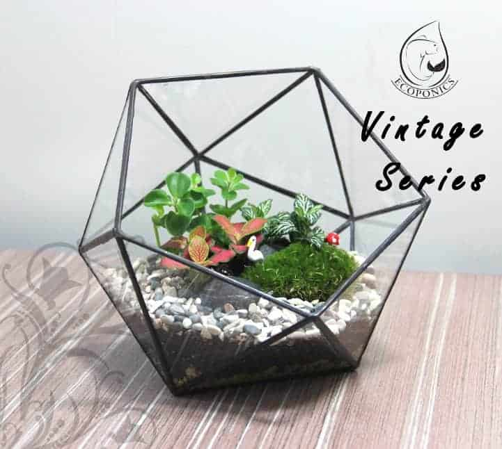 Terrarium Vintage Series Glass Bottle Vintage Series - VS 04 August 2021