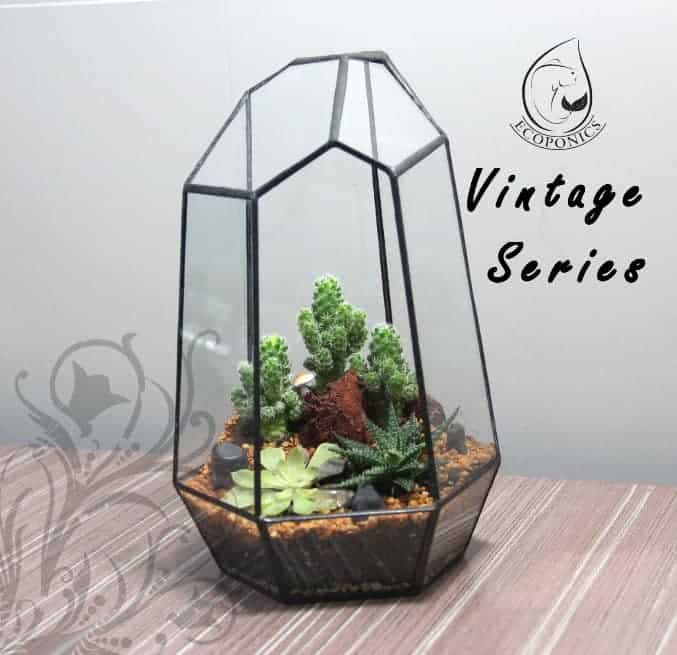 terrarium Vintage Series - VS 05 August 2021