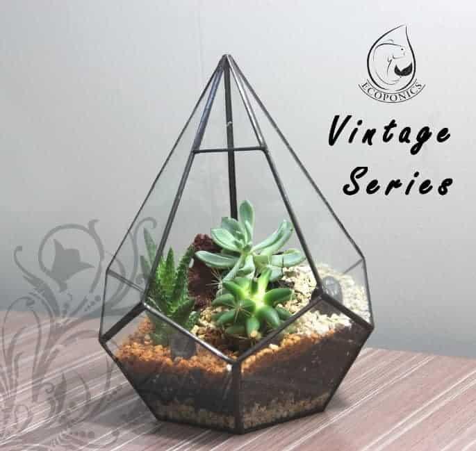 terrarium Vintage Series - VS 06 April 2021