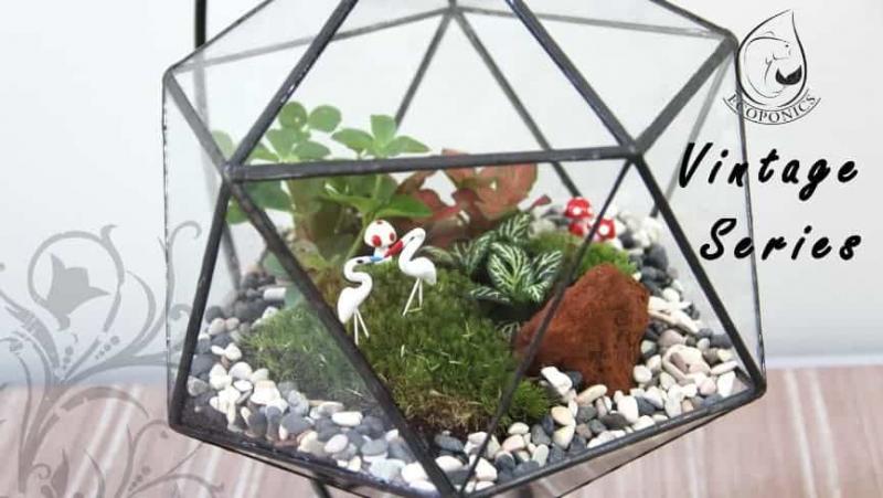 terrarium Vintage Series - VS 08 April 2021