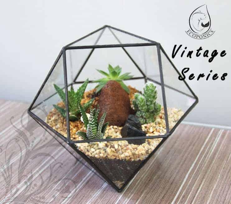 terrarium Vintage Series - VS 01 August 2021