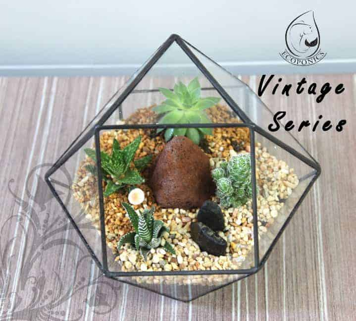 terrarium Vintage Series - VS 01 April 2021
