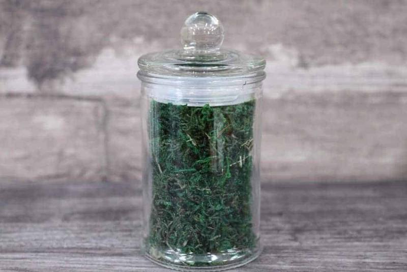 Terrarium supplies Singapore Decorative Green Moss April 2021